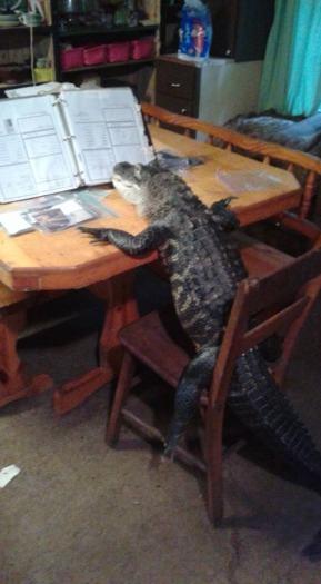 Rambo The Alligator Desk.jpg